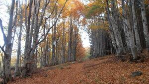 Фотогалерия: По есенните пътеки на Витоша