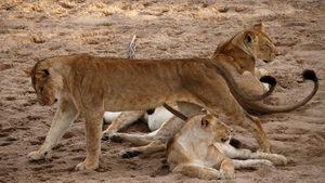 Фотоистория: Нови технологии срещу бракониерите