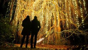 Фотогалерия: Коледната градина на Берлин