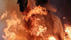 Фотогалерия: Коне прескачат огнени пламъци в чест на покровителя си