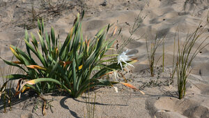Правителството предлага по-строги мерки за опазване на дюните