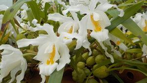 Учебни засаждания и стотици цветя предлага Ботаническата градина в София днес и утре