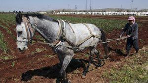 """Борбата на Ердоган с """"хранителния терор"""" няма да спаси турското земеделие"""