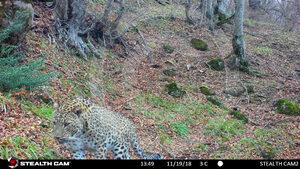 Фотогалерия: Зоологическа експедиция за леопарди и хиени в Азербайджан