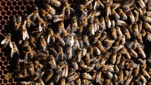 В Бавария може да има референдум за пчелите след исторически успех на петиция