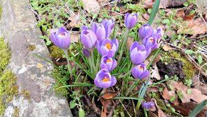 Така при мен пристигна пролетта