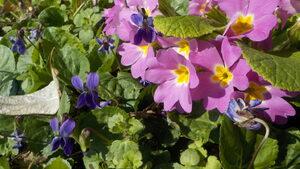 Пролетта настъпва