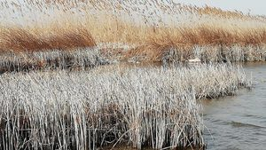 Шабленско езеро е източено, тъй като е наводнявало правителствената резиденция