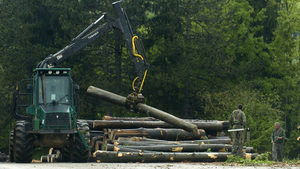 Незаконната сеч в България достига една трета от общия добив на дърва, обяви WWF