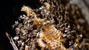 Странджанският манов мед вече е със защитено наименование за произход в ЕС