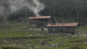 Общини си присвояват права при управлението на горите, установи прокуратурата