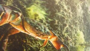 Фотоизложба - подводният свят на Черно море
