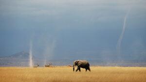 Африканската страна с най-много слонове в света разреши лова им