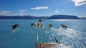 Снимка на деня: С кучешки впряг през топяща се Гренландия
