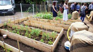 Тайната зеленчукова градина на София