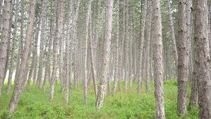 Близо 41% от територията на България е покрита с гори