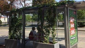 Във Виена чакат автобуса или трамвая под сянката на диви лози
