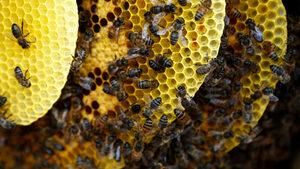 Не са само горите: Бразилия е загубила 500 млн. пчели за три месеца