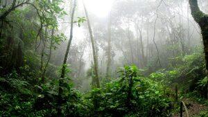 4+1 | За индианската култивация на горите в Амазония, за двигателя, който нарушава законите на физиката, и още