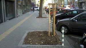 Току-що посадено дърво