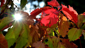 Есента остава слънчева и топла