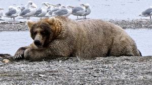 4+1 | За най-голямата бариера по пътя към Космоса, за седмицата на най-дебелата мечка и още