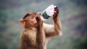 4+1 | За маймуните и хората, нови подробности за квантовото надмощие на Google и още