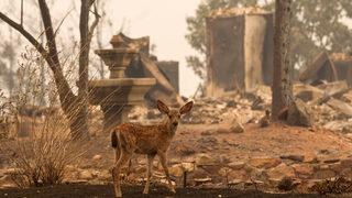 Фотогалерия: Над 12 хил. души се борят със 17 пожара в Калифорния