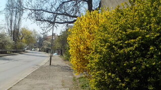 Да се порадваме на пролетта