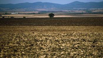 През 2018 г. земеделската земя е поскъпнала със 7.9%