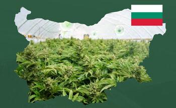 Канадска компания обяви, че има 150 хил. декара за производство на канабис в България