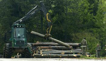 Дърводобивните фирми в Смолянско готвят протести заради ограниченията срещу чумата