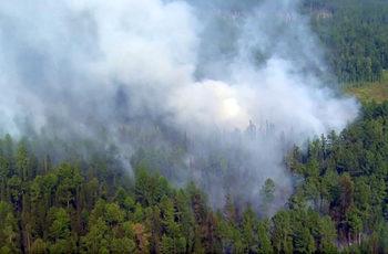 Площта на горските пожари в Русия е започнала да намалява