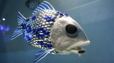 Риби-роботи ще душат за замърсители Zx450y250_693145