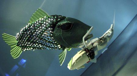 Риби-роботи ще душат за замърсители Zx450y250_693147