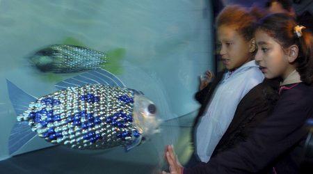 Риби-роботи ще душат за замърсители Zx450y250_693149