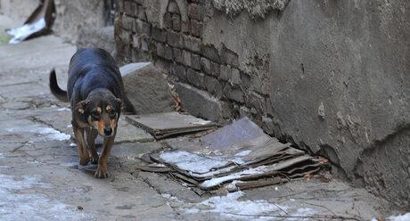 Бездомни кучета се разхождат навсякъде в София