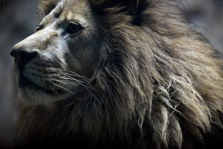 Зоопаркът в София стана на 130 години и празнува цял месец