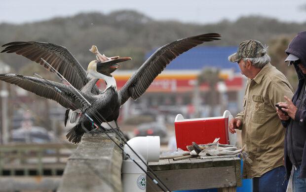 Фотогалерия: Как Флорида ремонтира плажовете си