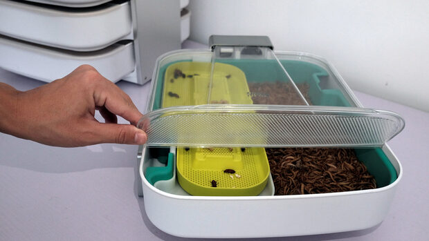 Да си сготвим вечеря с брашнени червеи, предлага хонконгски стартъп