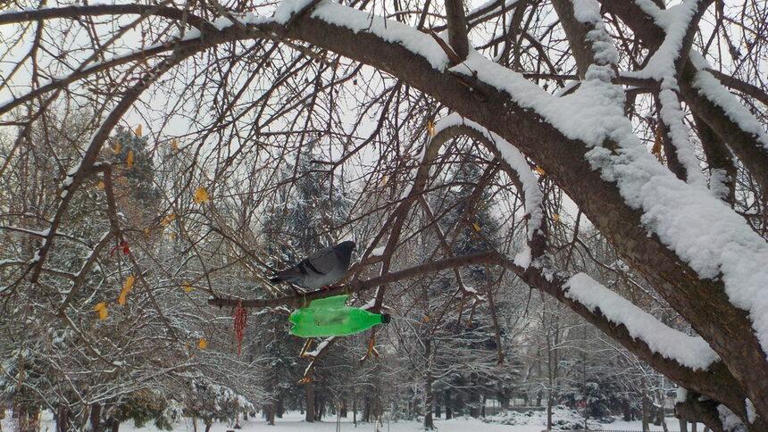 Същото е положението и с хранилката при патешкото езеро. Птиците очакват с нетърпение.