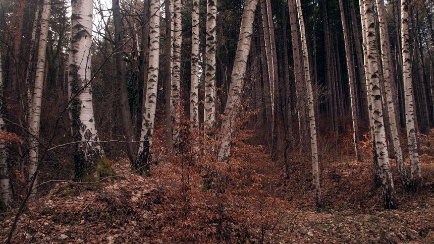 Дали да живеем в хармония с природата като на Витоша...